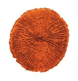 Circular tree texture